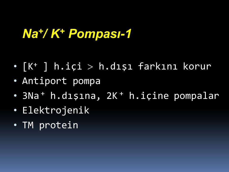 Na+/ K+ Pompası-1 [K+ ] h.içi  h.dışı farkını korur. Antiport pompa. 3Na + h.dışına, 2K + h.içine pompalar.